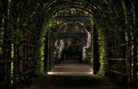 garden-path-way-park
